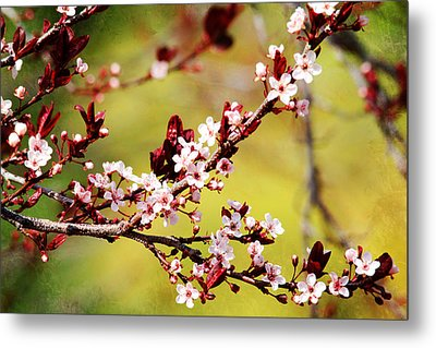 Metal Print featuring the photograph Plum Blossoms by Trina  Ansel