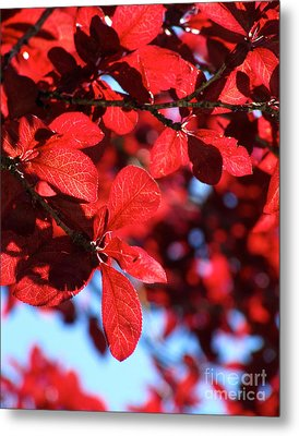 Plum Tree Cloudy Blue Sky 2 Metal Print by CML Brown