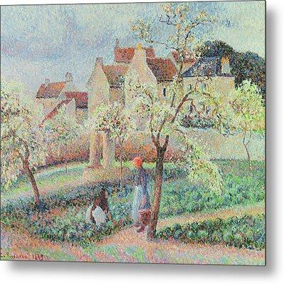 Plum Trees In Flower Metal Print by Camille Pissarro
