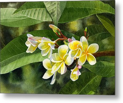 Plumeria Blossoms Metal Print by Sharon Freeman