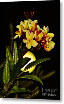 Plumeria On The Full Moon Metal Print by Craig Wood