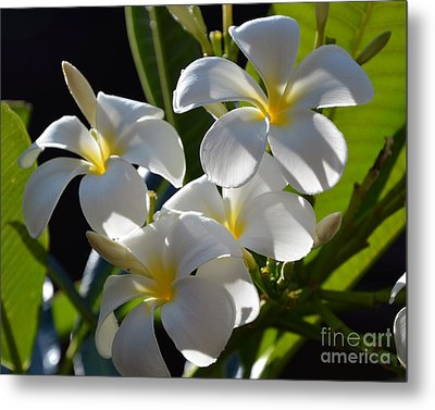 Metal Print featuring the photograph Plumeria's IIi by Robert Meanor