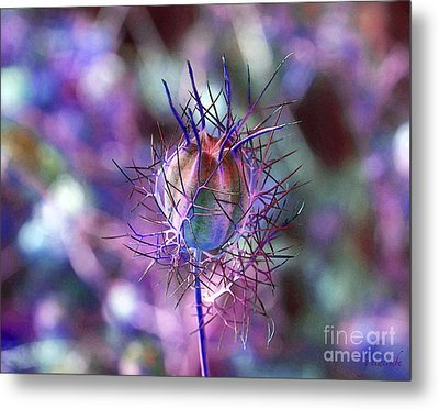 Metal Print featuring the photograph Pod Play by Gwyn Newcombe