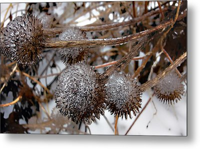 Pods In Ice Metal Print by Ellen Tully