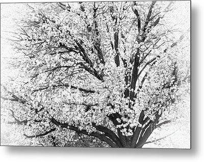 Metal Print featuring the photograph Poetry Tree by Roselynne Broussard