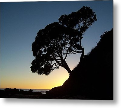 Metal Print featuring the photograph Pohutukawa Trees At Sunrise by Peter Mooyman