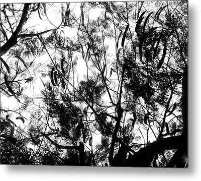 Metal Print featuring the photograph Poinciana Lace by Amar Sheow