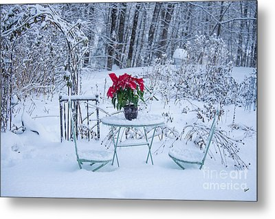 Poinsettia In The Snow Metal Print by Alana Ranney