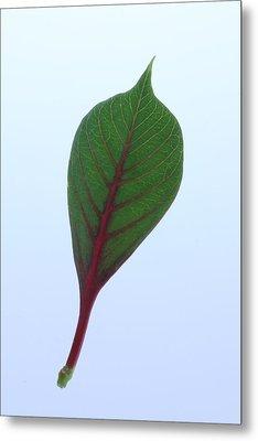 Poinsettia Leaf Metal Print by Richard Stephen