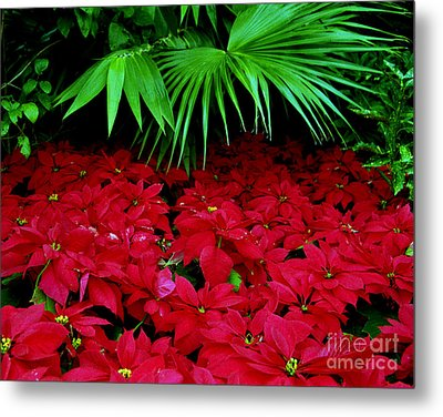 Metal Print featuring the photograph Poinsettias And Palm by Tom Brickhouse