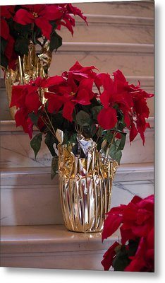 Poinsettias Metal Print by Patricia Babbitt
