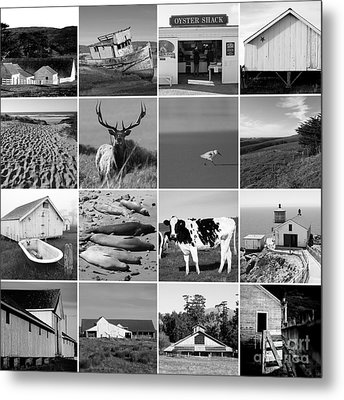 Point Reyes National Seashore 20150102 Black And White Metal Print by Wingsdomain Art and Photography