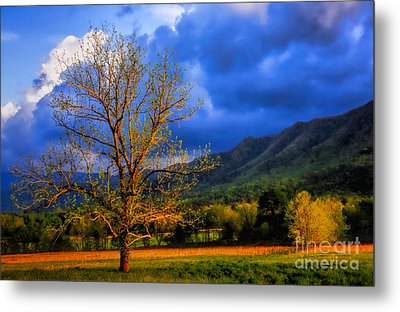 Pointing To Majestry  Metal Print