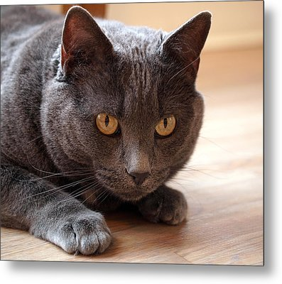 Poised To Pounce Metal Print by Rona Black