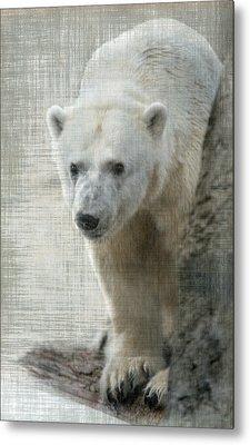Polar Bear Metal Print by Angie Vogel