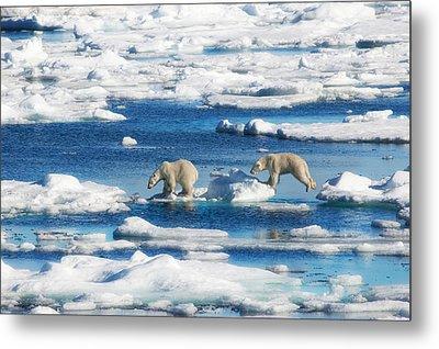Polar Bear Cubs In Svalbard Metal Print by June Jacobsen