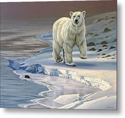 Polar Bear On Icy Shore    Metal Print