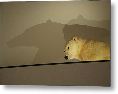 Polar Bear Shadows Metal Print