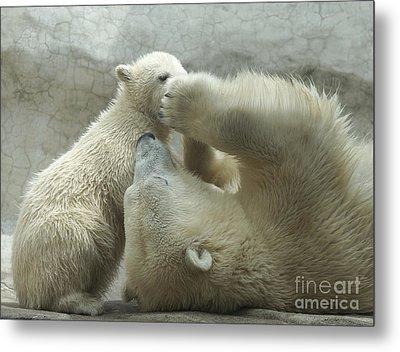 Polar Bears 4 Metal Print