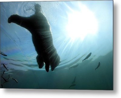 Polar Plunge Metal Print by Jackie Novak