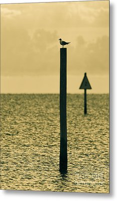 Pole Position Metal Print