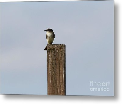 Pole Sitting Metal Print by Theresa Willingham