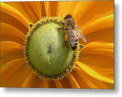 Pollen Time Metal Print by Brian Chase