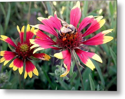 Pollination #1 Metal Print by Camille Reichardt