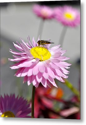 Metal Print featuring the photograph Pollination by Cathy Mahnke