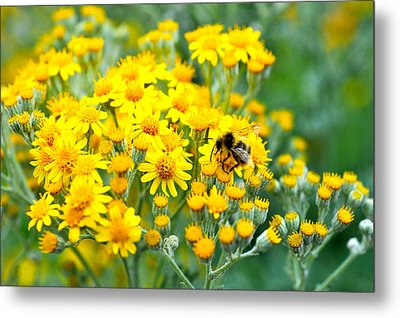 Metal Print featuring the photograph Pollination by Crystal Hoeveler