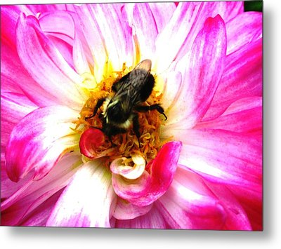 Pollination Nation 2 Metal Print by Will Boutin Photos