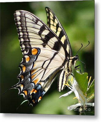 Polychromatic Beauty Metal Print