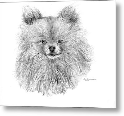 Pomeranian Metal Print by Jim Hubbard