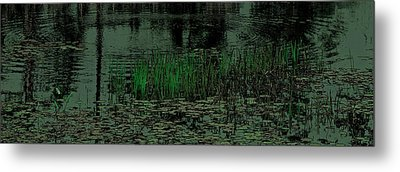 Pond Grasses Panorama Metal Print by David Patterson