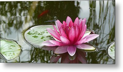 Pond Magic Metal Print