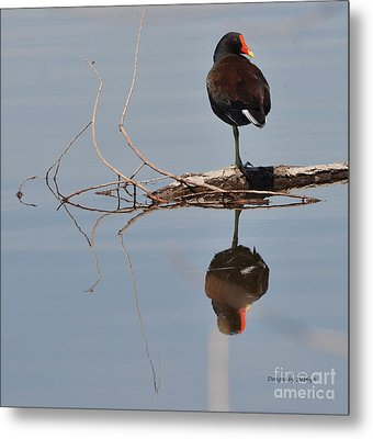 Metal Print featuring the photograph Pond Reflection by Debby Pueschel