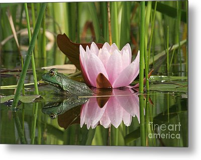 Pond Reflections Metal Print by Judy Whitton