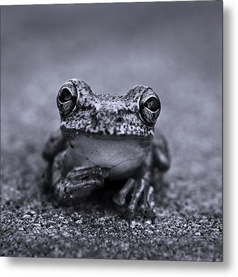 Pondering Frog Bw Metal Print by Laura Fasulo
