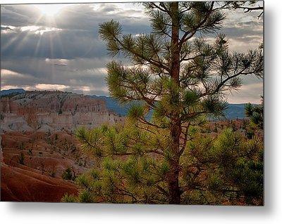 Ponderosa Pine Tree - Bryce Canyon Metal Print by R J Ruppenthal