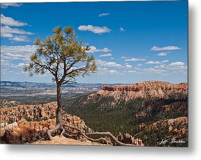 Metal Print featuring the photograph Ponderosa Pine Tree Clinging To Life On Canyon Rim by Jeff Goulden