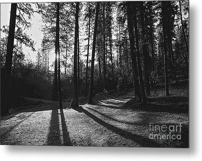 Metal Print featuring the photograph Ponderosa Shadows by Lennie Green