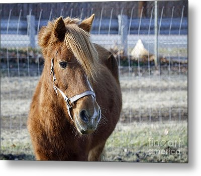 Pony Metal Print by Denise Pohl