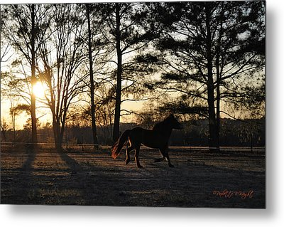 Pony's Evening Pasture Trot Metal Print by Paulette B Wright