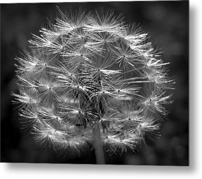 Metal Print featuring the photograph Poof - Black And White by Joseph Skompski