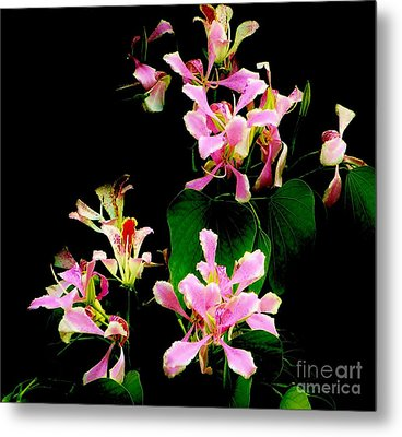 Poor Mans Orchid Metal Print by Amar Sheow