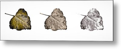Poplar Leaf Fade To Black And White Metal Print by Greg Jackson