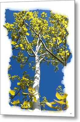 Poplar Tree In Spring  Metal Print by Will Borden