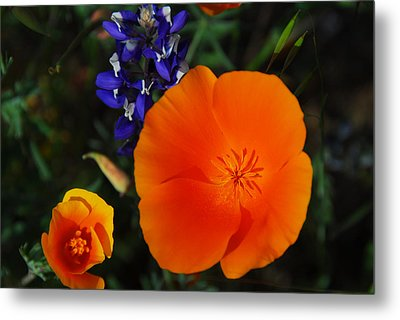 Poppies And Lupine Metal Print by Lynn Bauer