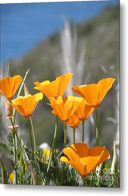 Poppies Metal Print by Bev Conover