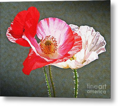 Poppies  Metal Print by Chris Berry